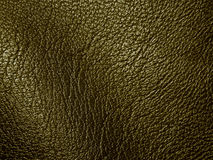 Texture of genuine leather Stock Images