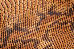 Texture of genuine leather close-up, with embossed scales reptiles, trend background. Texture of genuine leather close-up, with embossed scales of reptiles, the Royalty Free Stock Photos