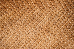 Texture of genuine leather close-up, with embossed scales  reptiles, the trend pattern. Texture of genuine leather close-up, with embossed brown scales of Stock Photos