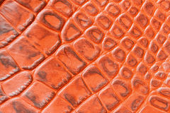 Texture of genuine leather close-up,embossed under the skin crocodile. For modern pattern, wallpaper or banner design. Texture of genuine leather close-up Royalty Free Stock Photo