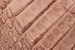 Texture of genuine leather close-up, embossed under the skin a light-brown crocodile, background Stock Images