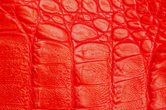 Texture of genuine leather close-up, embossed under the skin  a red crocodile Stock Photos