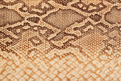 Texture of genuine leather close-up, embossed under the skin  a reptile, bright brown, background Royalty Free Stock Photo