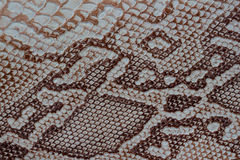 Texture of genuine leather close-up, embossed under the skin a reptile, with fashion pattern and matte surface. Natural Stock Photos