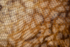 Texture of genuine leather close-up, embossed under the skin a reptile, trend background. Texture of genuine leather close-up, embossed under the skin a brown Stock Photos