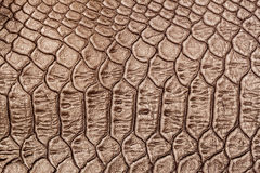 Texture of genuine leather close-up, embossed under the squama skin a light-brown crocodile, background Stock Photography