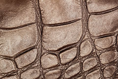 Texture of genuine leather closeup, embossed under the skin a brown reptile, walnut color Stock Image