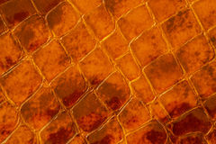 Texture of genuine patent leather close-up, embossed under the skin a brown reptile. For modern pattern, wallpaper or. Banner design, place for your text Stock Images