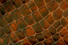 Texture of genuine patent leather close-up, embossed under the skin a dark brown reptile. For modern pattern, wallpaper. Texture of genuine patent leather close Royalty Free Stock Photos