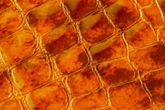 Texture of genuine patent leather close-up, embossed under the skin a orange-brown reptile. For modern pattern. Texture of genuine patent leather close-up Stock Photo