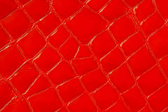 Texture of genuine patent leather close-up, embossed under the skin a red reptile. For modern pattern, wallpaper or. Texture of genuine patent leather close-up Stock Photography