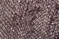 Texture of genuine patent leather close-up, embossed under the skin reptile, background Stock Photos
