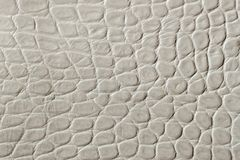 Texture of genuine patent leather close-up, embossed under the skin reptile. For modern pattern, wallpaper or banner. Texture of light cream genuine patent royalty free stock photos