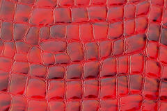 Texture of genuine patent leather close-up, embossed under the skin a reptile red color, trend exotic background. Texture of genuine patent leather close-up Royalty Free Stock Image