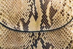 Texture of genuine snakeskin Stock Images