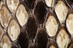 Texture of genuine snakeskin Royalty Free Stock Photography
