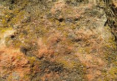 Texture geologic. Geologic texture of stone with moss Stock Images