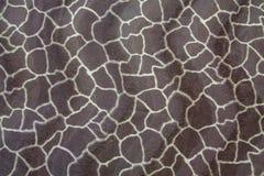 Texture of giraffe pattern skin Stock Photography