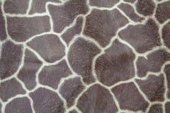 Texture of giraffe pattern skin Royalty Free Stock Photos