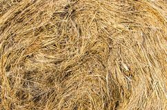 Texture gold hay. On warm evening Royalty Free Stock Image