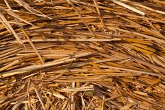 Texture of golden dry straw stock images