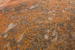 Texture of Golden yellow orange Lichen on rocks at Remarkable Ro Stock Photos