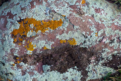 Texture of Granite Stone Covered by Colorful Grey Green Red Orange Moss Royalty Free Stock Photography