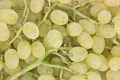 The texture of grapes berries. The texture of sweet grapes berries Royalty Free Stock Photo