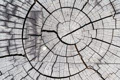 Texture graphique en bois Photographie stock