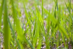 Texture of grass stock photos