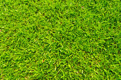 Texture of grass. For background royalty free stock images