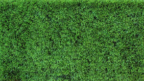 Texture grass Stock Images