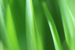 Texture grass Stock Image