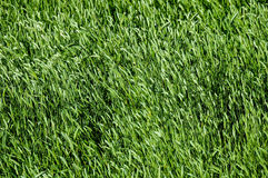 Texture Grass Royalty Free Stock Images
