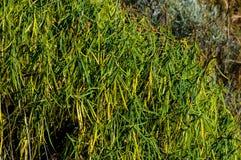 Texture Grass Stock Photo