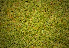 Texture grass Golf Course for design pattern and background. Texture grass Golf Course for design pattern and background Royalty Free Stock Photography