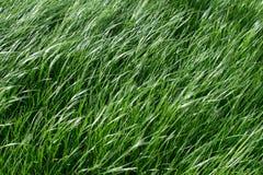 Texture grass. The green grass texture, pattern for background Stock Photos