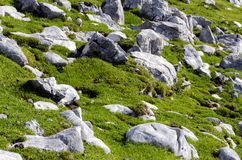 Texture of grass with rocks. Stock Photography