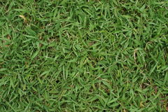 Texture of grass Stock Image
