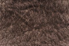 texture gray black woolen surface close Royalty Free Stock Photography