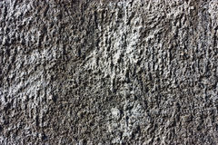 Texture of gray cement wall Stock Images