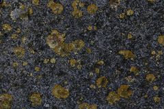 Texture of gray concrete covered with moss stock images