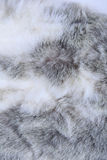 Texture of gray fur Royalty Free Stock Photo