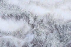 Texture of gray fur Stock Images