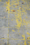 Texture of gray stone pavement with yellow flower. A photo of texture of Gray Stone Pavement with yellow flower; Old Stone pavement background covered with Stock Images
