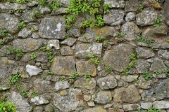 Texture of gray stone wall covered with lichen and plants Royalty Free Stock Photography