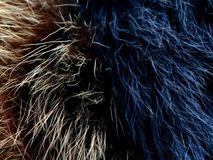 Texture of gray wolf hair fur. Texture of fur. Wool of wolf. Wool of dog. Texture of gray wolf hair fur. Wool of wolf. Wool of dog stock photo