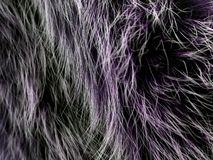Texture of gray wolf hair fur. Texture of fur. Wool of wolf. Wool of dog. Texture of gray wolf hair fur. Wool of wolf. Wool of dog stock images
