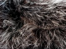 Texture of gray wolf hair fur. Texture of fur. Wool of wolf. Wool of dog. Texture of gray wolf hair fur. Wool of wolf. Wool of dog royalty free stock photo