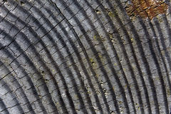 The texture of gray wood Royalty Free Stock Photos